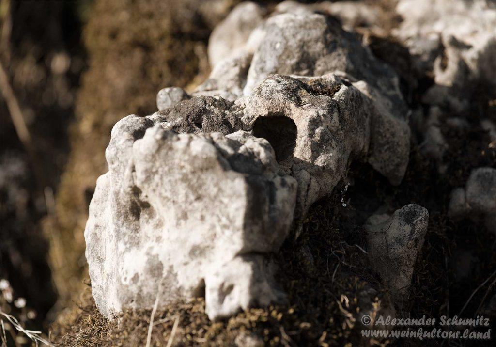 Besondere Formen aus Muschelkalk